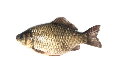 carp fish Stock Photo - 18462866