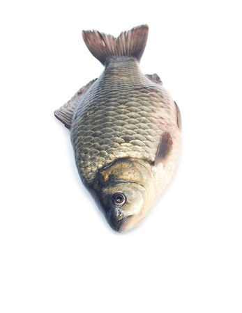 carp fish Stock Photo - 18462635