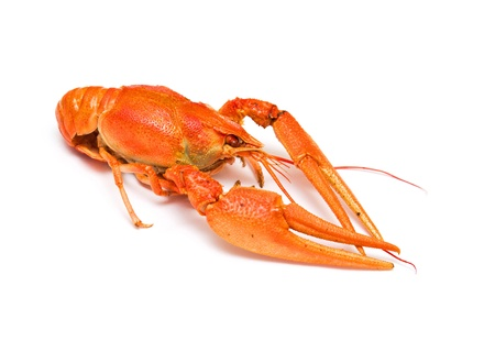Boiled crayfish on white background  photo
