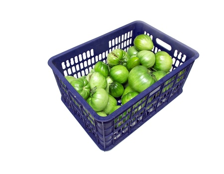 The blue plastic bin, tomato. Stock Photo - 18760760