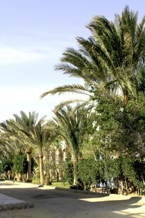 naama bay: tropical beach in Egypt Stock Photo
