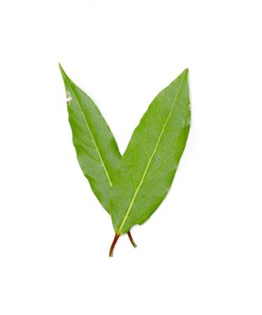 白い背景の上の木の緑の葉