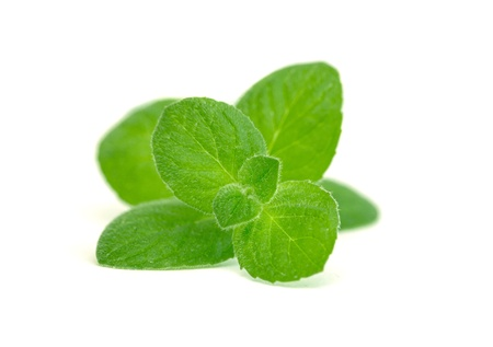Mint leaves on a white background photo