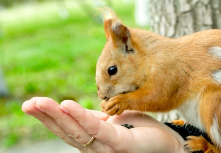 eyes hazel: squirrel sitting on the human hand