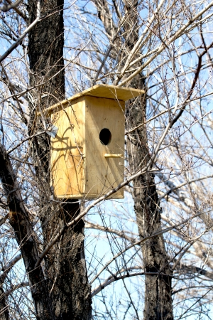 wooden birdhouses in the forest photo