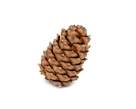 Cedar cone isolated on white background Stock Photo