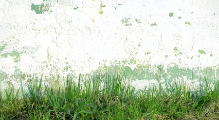 green grass on a background of a wall photo