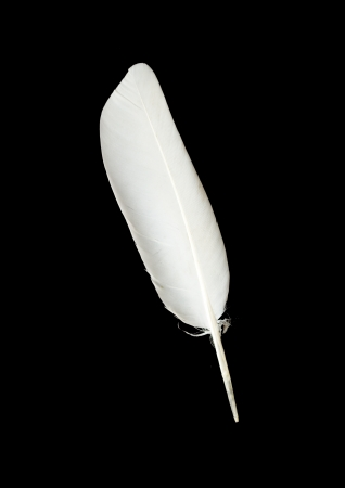 feather pen: pigeon feather on the black background Stock Photo