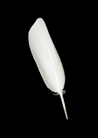 pluma blanca: pluma de paloma en el fondo negro Foto de archivo