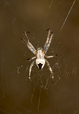 spider on the web photo
