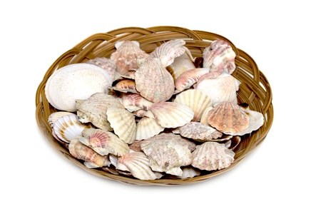 ossified: seashells in a basket on a white background