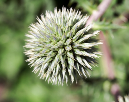 poky: close up shot of thorny plant in nature Stock Photo