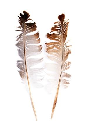 ホワイト バック グラウンド上の抽象的な鳥の羽