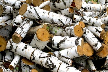 sawed: Reserves of birch logs closeup