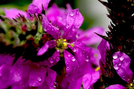 purple flowers with water drops photo