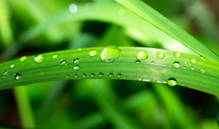 Fresh grass with dew drops close up Stock Photo
