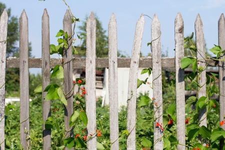 Old wooden fence in the garden photo