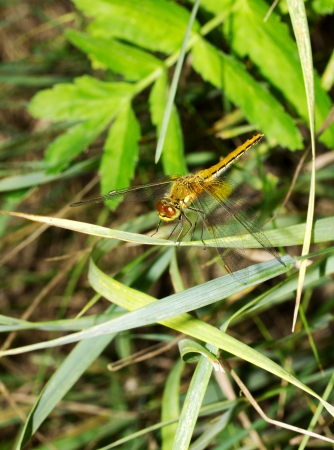 dragonfly close up photo