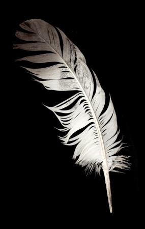 feather against black photo