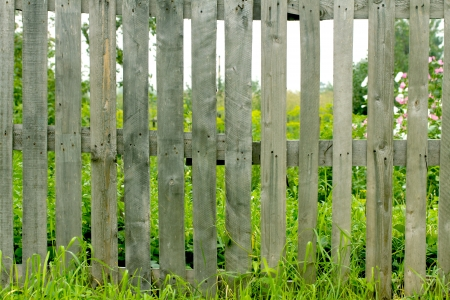 Fresh spring green grass and leaf plant over wood fence background photo