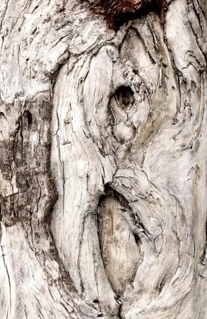 Wooden Swirls Organic Background Texture Stock Photo - 21905707