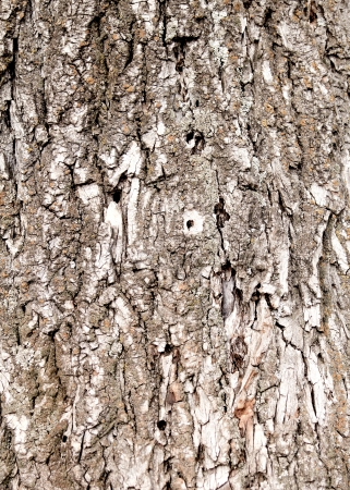 Old rough tree bark background texture organic patterns Stock Photo - 21905708