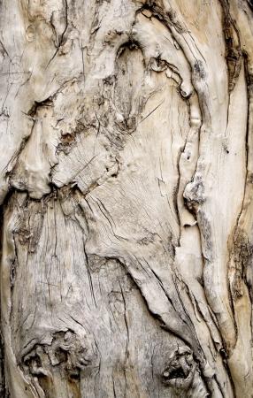 Wooden Swirls Organic Background Texture Stock Photo - 21905709