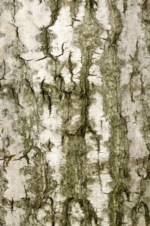 Old rough tree bark background texture organic patterns Stock Photo - 21905722