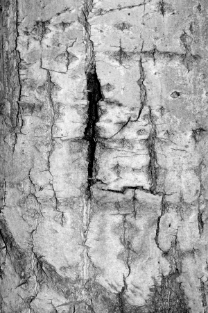 Old rough tree bark background texture organic patterns Stock Photo - 21905721