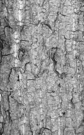 Old rough tree bark background texture organic patterns Stock Photo - 21905743