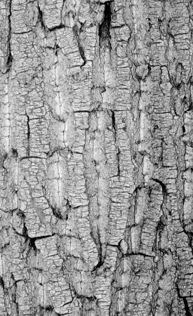 Old rough tree bark background texture organic patterns Stock Photo - 21905744