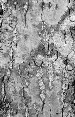 Old rough tree bark background texture Stock Photo - 21905767