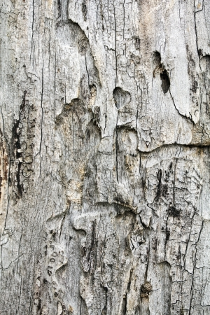 Old rough tree bark background texture Stock Photo - 21905776