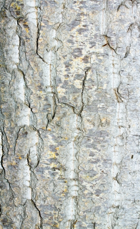 Old rough tree bark background texture Stock Photo - 21905798