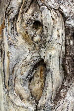 Old rough tree bark background texture Stock Photo - 21905871