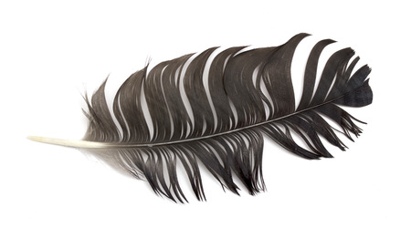 feather of a bird photo