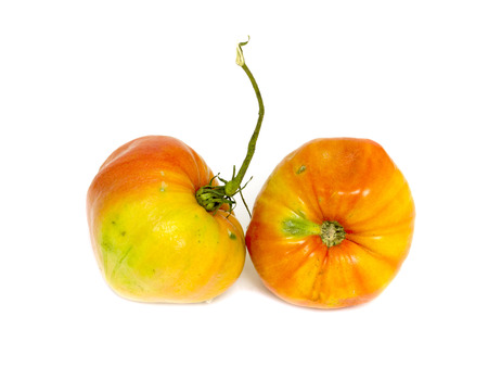 old tomato on white background photo