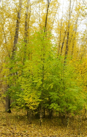 Collection of Beautiful Colorful Autumn Leaves  green, yellow, orange, red photo