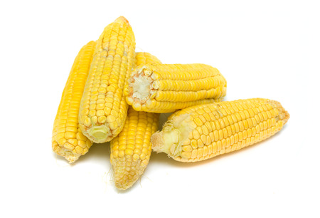 corn on the cob on a white background photo