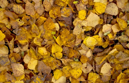 Autumn leaves texture photo