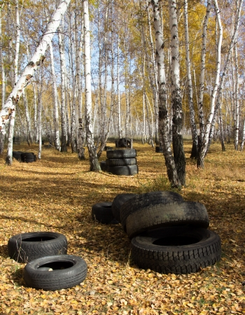 dumped: Old automobile tyre thrown out in a forest