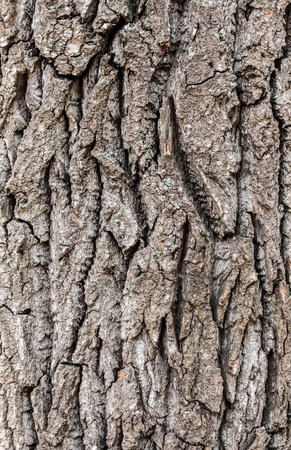 tex: Old rough tree bark background texture