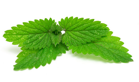 mint leaves isolated on white background photo
