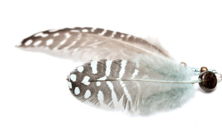 bird feather on white background photo