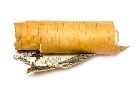 rolled up in roll birchs bark on white background photo