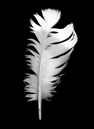 mirrored: bird feather on black background