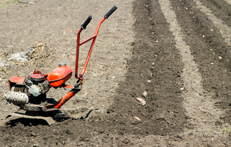 motor hoe: Small rotary cultivator working in garden