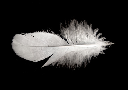 lightly: bird feather isolated