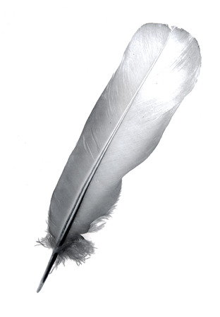 lightly: Feather isolated over white background