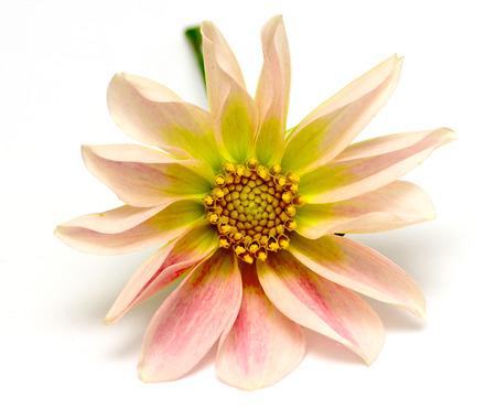 白地に美しい花